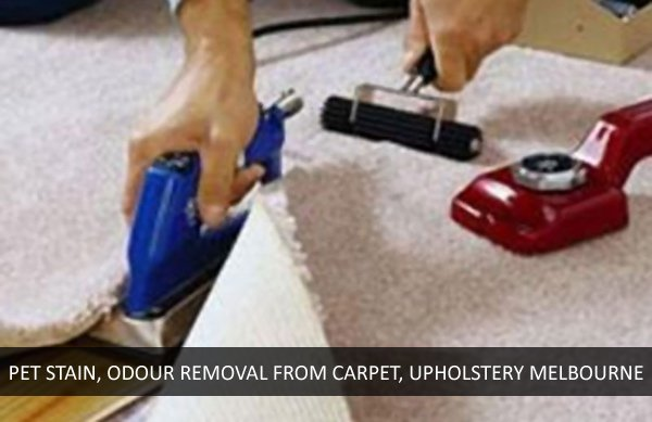 Pet Stain and Odour Removal from Carpet and Upholstery Essendon West