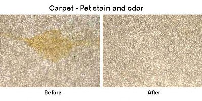 Eliminate Stinky Pet Odour Albert Park 3206