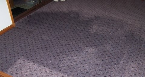 Wet Carpet Cleaning Greens Creek