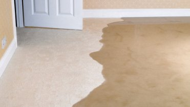 Living room carpet flooding Princes Hill 3054