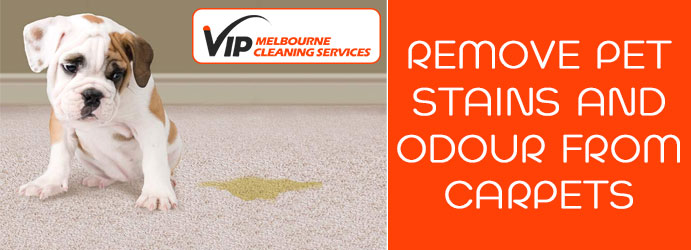 Remove Pet Stains From Carpets