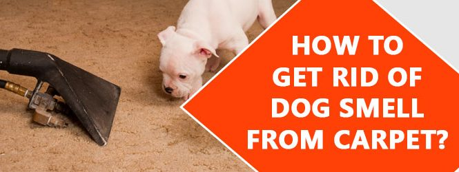 Get Rid Dog Smell From Carpet Melbourne
