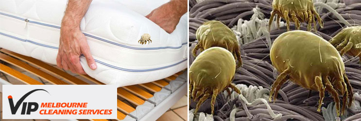 Mattress Dust Mites Treatment